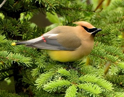 The criminal element of the Bird world.
