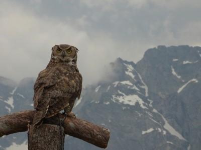 Beautiful bird taken in Austria with beautiful backdrop