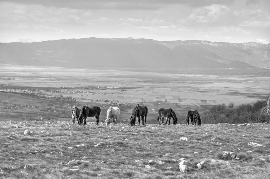 BW Horses