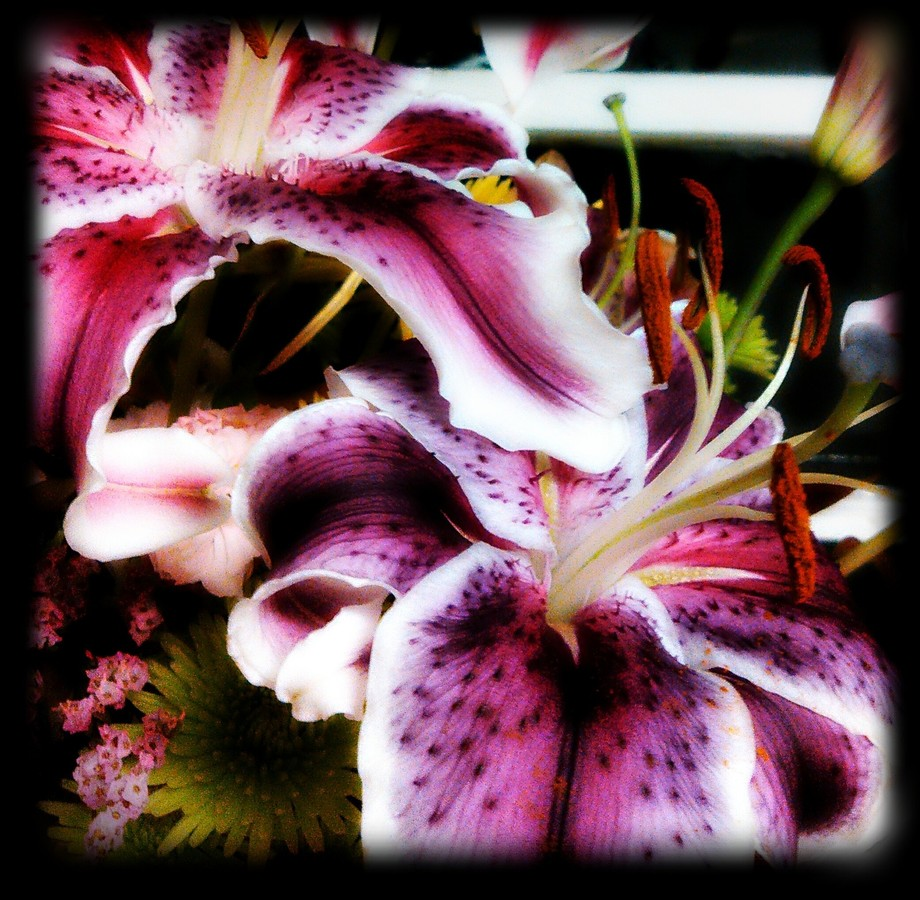 Took some shots of a friends flowers arrangement that her husband bought her.  They were just bre...
