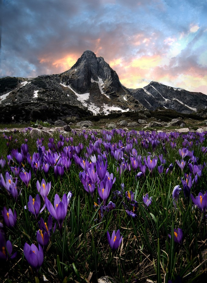 Rila Mountain by atanasdonev - Beautiful Flowers Photo Contest