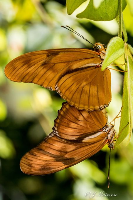 Butterfly Love 2