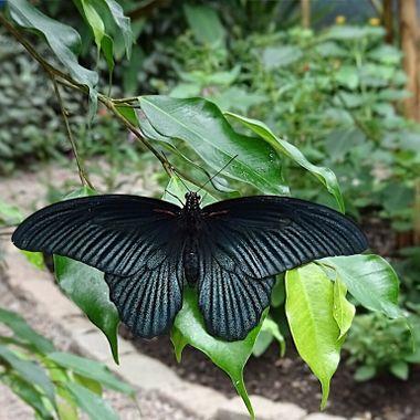 Fluttering in Black