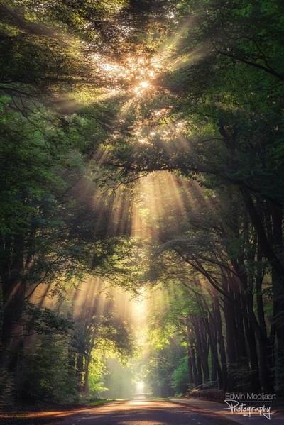 Angel of Light.  Taken last week in the Netherlands on a foggy morning