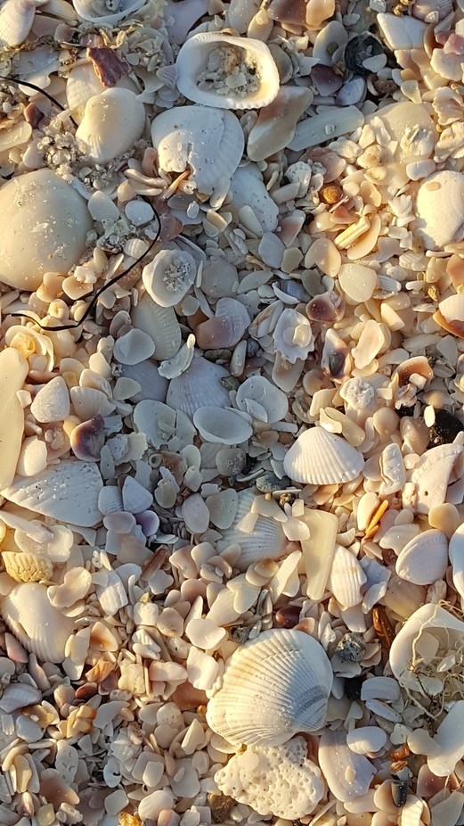 The beach is made up of shells instead of sand. Great opportunity  to capture the rich textures, shapes  and colours.