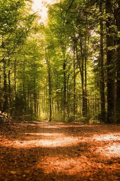 Licht-durch-die-Bäume