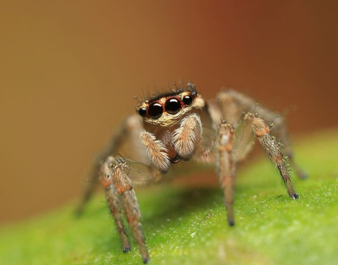 Little Bark Jumper. by merrittimages - Macro And Patterns Photo Contest