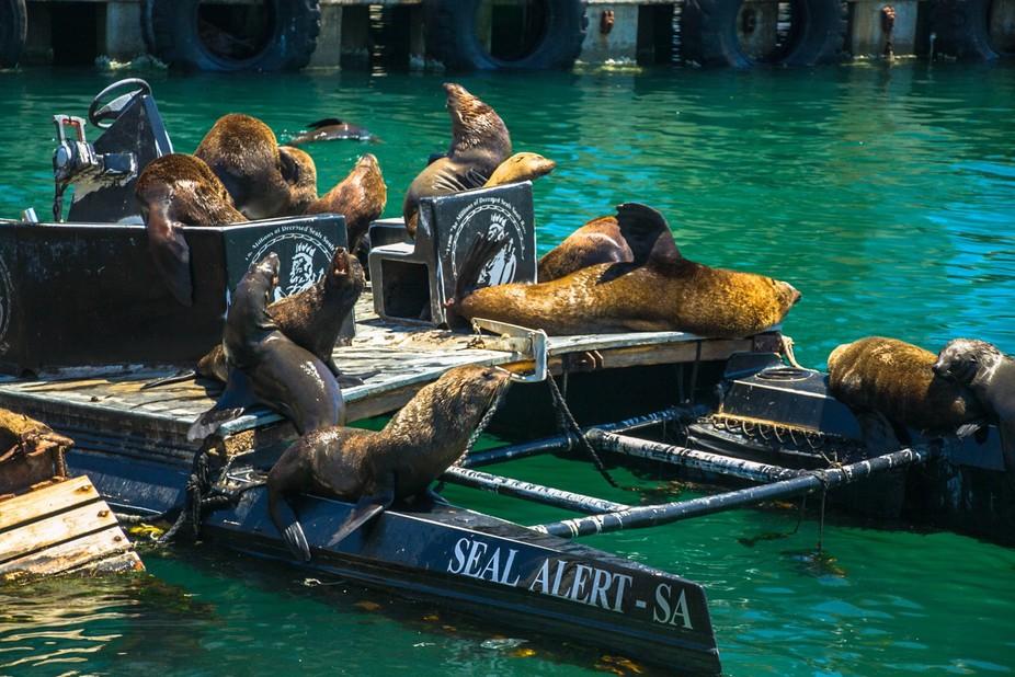 Seals @ Sea