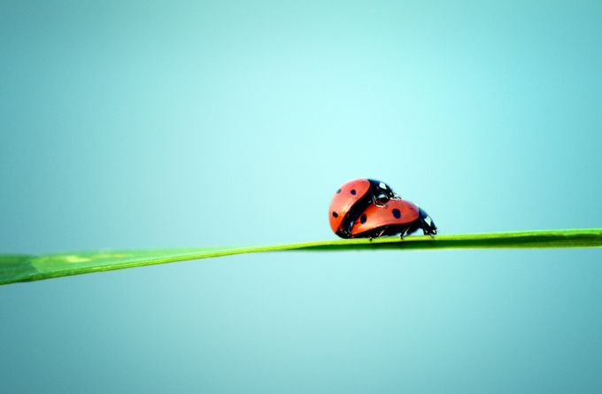 Ladybirds summer by alexmazilu - Macro And Patterns Photo Contest