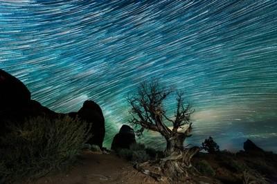 Magical Tree Star Trails