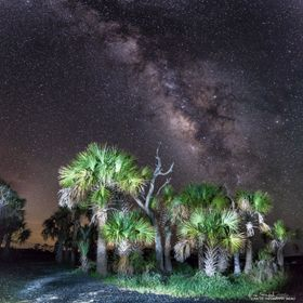 This composition is a 4 horizontal images stitched together with some light painting on the Palms.  Taken in Cedar Key, Florida, USA during a moo...