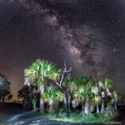 Milky Way Core over Palms