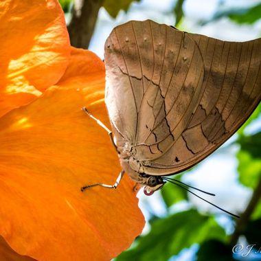 Butterfly 2017 1
