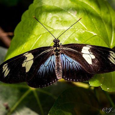 Butterfly 2017 4