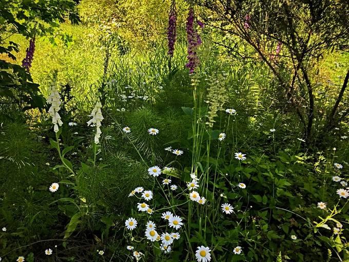 Pond meadow
