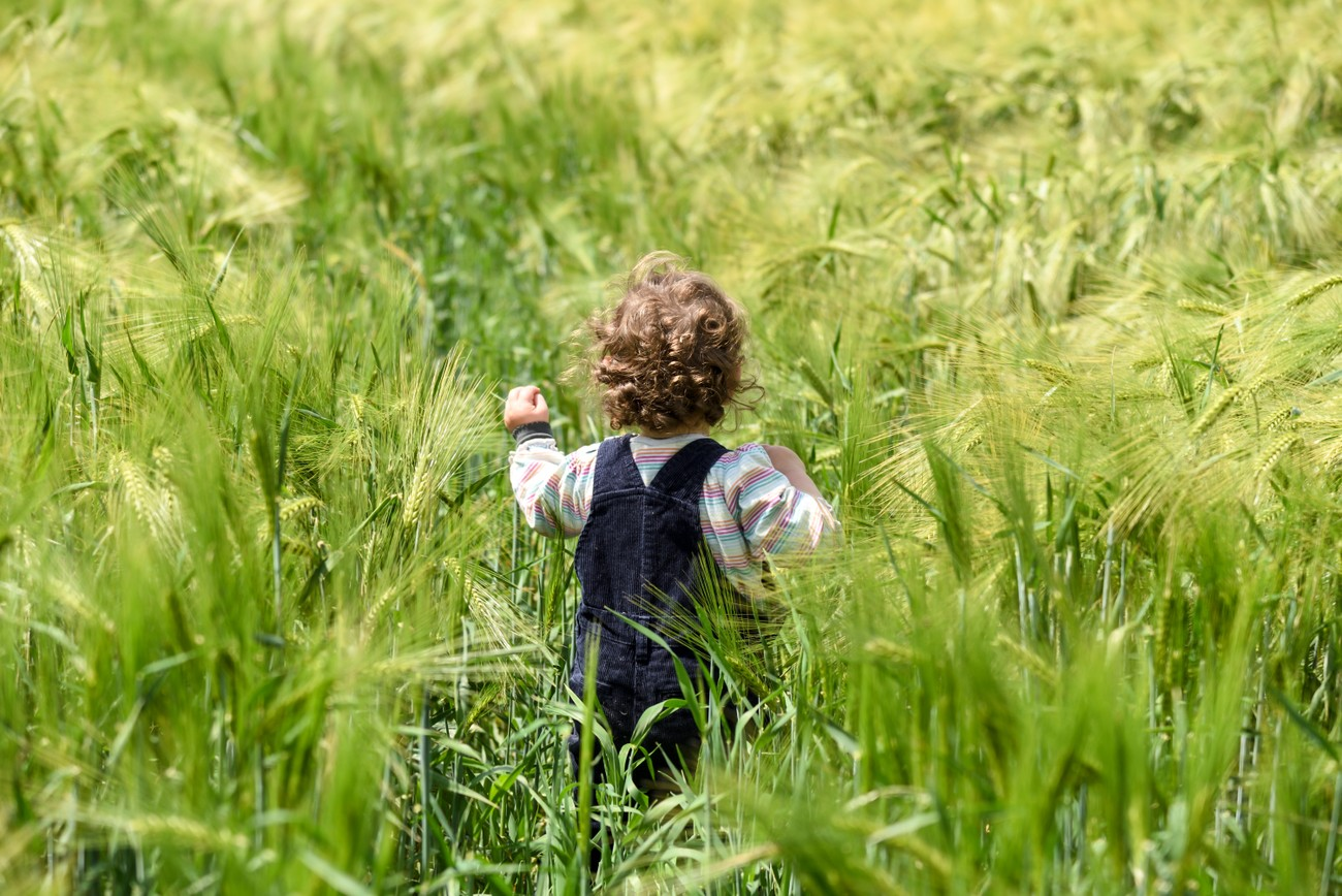 My grandchild now starts to discover everything-here a field of corn