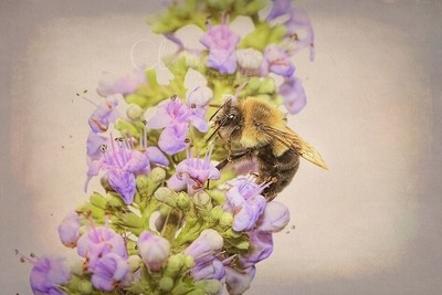 Wake up and collect the pollen... ヅ