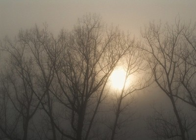 Sun through the mist.