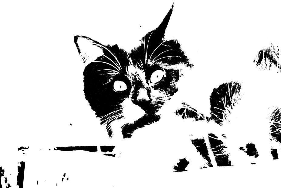 black and white netto