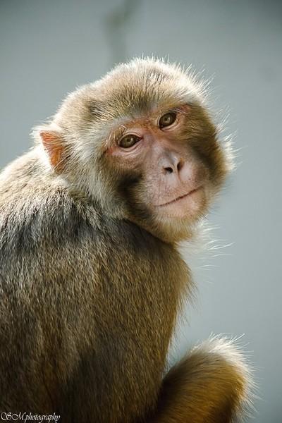 The Posing Monkey