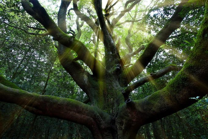 broceliande by EmmanuelVerzura - Tall Trees Photo Contest