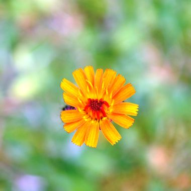 Orange Hawkbit