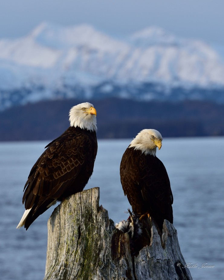A pair of eagles by kathijensen - Depth In Nature Photo Contest