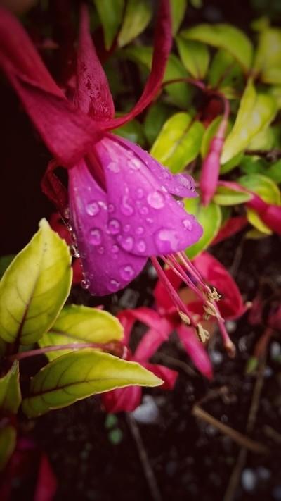 English Summer Rain.