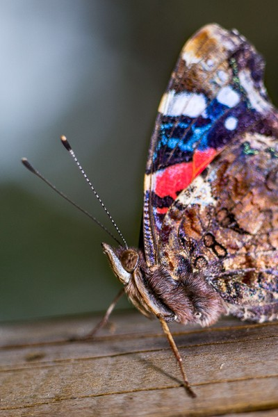 Colors of butterfly