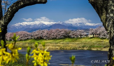 Mt. Zao and cherry blossoms