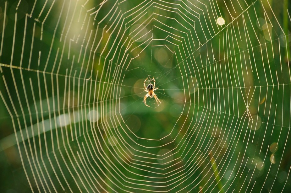 Just another beautiful morning out in God's creation when I found this spider and it&...