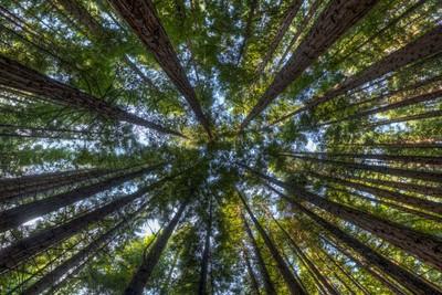 Warburton forest