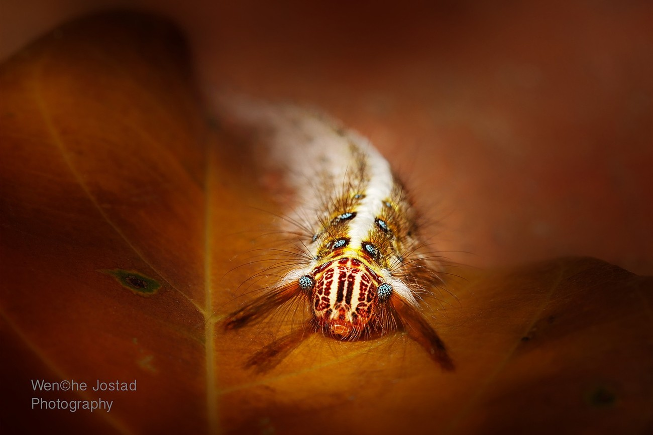 Macro and Patterns Photo Contest Winner