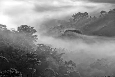Mist at dawn - IMG_2268-B