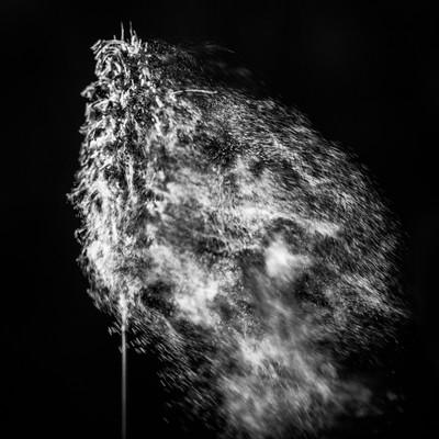 Pollen in Black & White-2