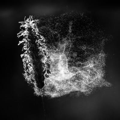 Pollen in Black & White-3
