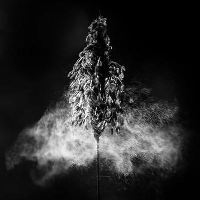 Pollen in Black & White-4
