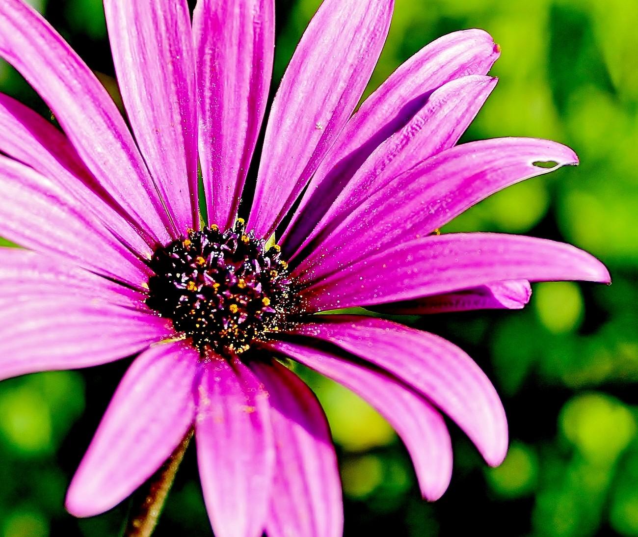 Purple Warmed by the Sun