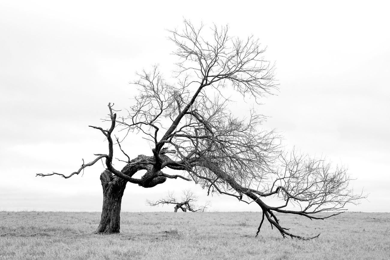 69 Photos Of Dry Trees Too Good Not To Share - ViewBug.com