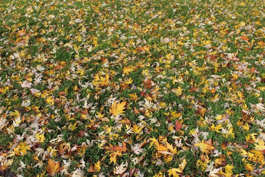 leaves diversification