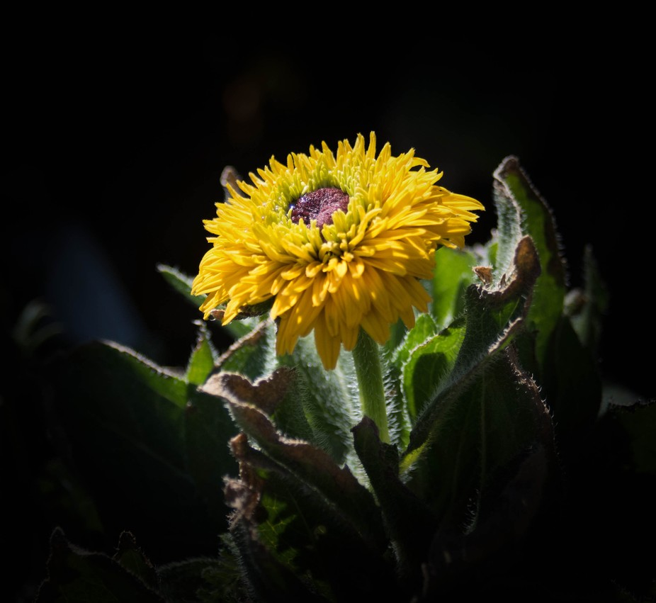 I spent time at Mesquite Valley Growers in Tucson taking about 150 flower photos