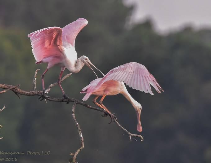 Heron - Upon Reflection - The Dawn Anthology