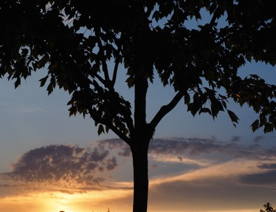Sunset Tree Part 1