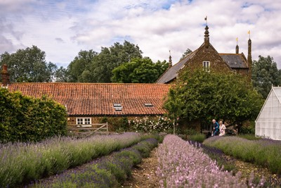 Lovely lavender...