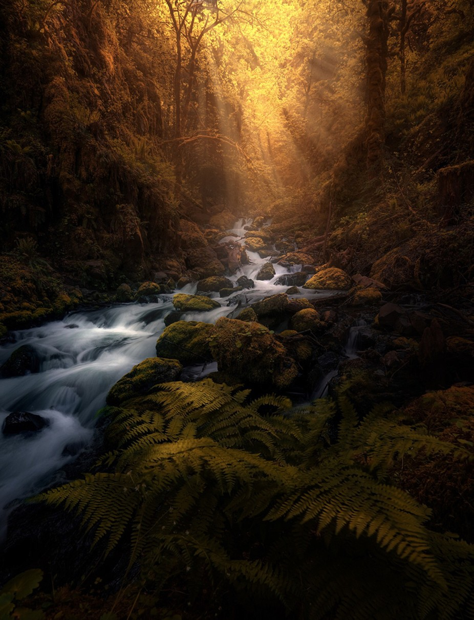 The Golden Gorge  by AkashWadhwani - Long Exposure In Nature Photo Contest