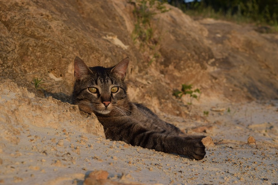 Sammy Davis Junior relaxing in the evening in the sand pit.