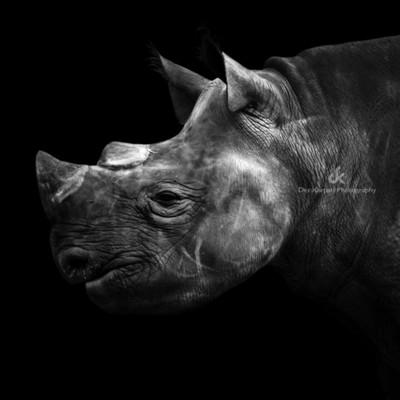 The Dark Side of Animals - Rhino II