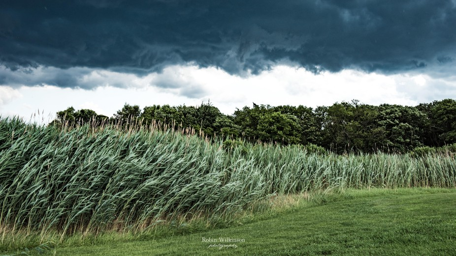 I love everything about a storm....the wind whipping, the blues are different and the greens are ...