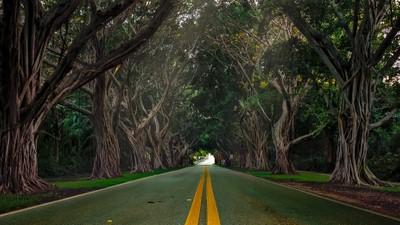 Hobe Sound Tree Canopy