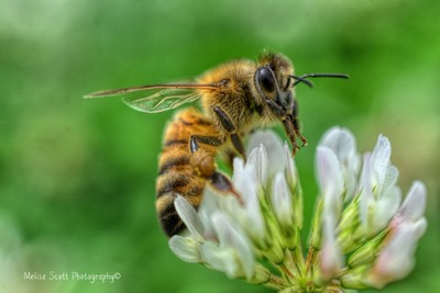 Jus a Bee Doing What He Does Best...